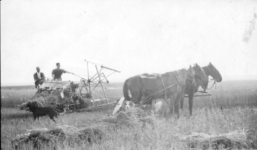 My great-grandfather Jasper Smith and great-aunt Myra harvesting wheat