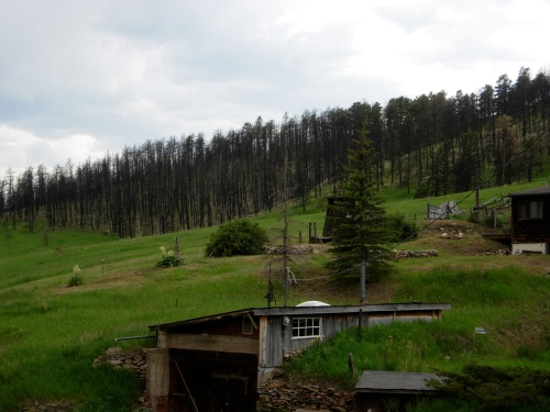 Fire claimed a ridge of pines outside Gold Hill in Boulder County